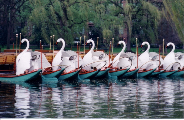 GBC-swanboat